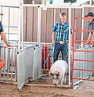 pig_gates 2